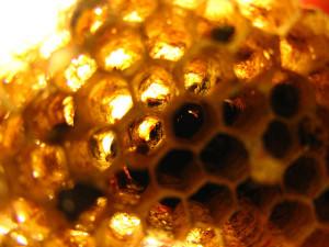 Tiszta és egészséges Méhpempő